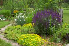Garden with purple and yellow flowers